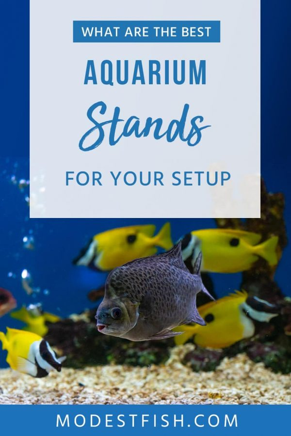 In this article, you'll discover how you can choose the best possible stand for your aquarium. You'll be taking through a detailed guide on how to choose, and then, you'll see reviews for the best aquarium stands for fish tanks ranging from 10, 29, 55, and 70+ gallons. #modestfish #aquarium