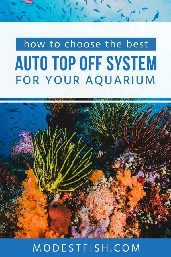 Automatic top-off systems can help you reduce daily tank maintenance to keep a constant salinity level in saltwater for the health of your fish and coral. Here's what you need to know, how to choose the best ATO system for your setup and you'll learn how to select the right system for you. #modestfish #reeftank #filtration