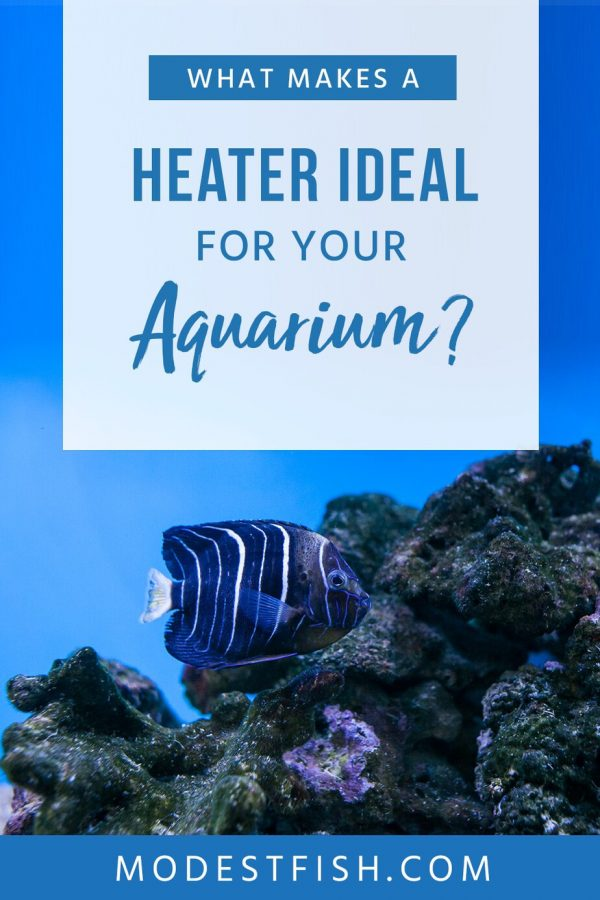 Picking the wrong heater can have dire consequences. Here are 5 of the best, most reliable heaters currently available so your fish and plants can thrive! #modestfish #aquarium #heater