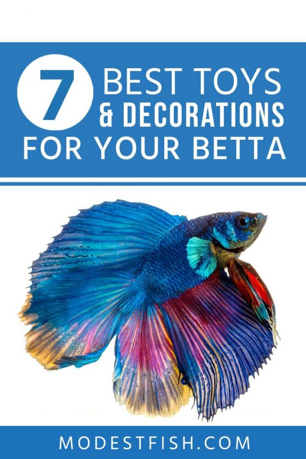 These toys and decorations can help your betta stay stimulated, happy, and active. In this article, you're going to discover the benefits of having toys and decorations for your betta and tips how to look out for when choosing the products. #betta #modestfish