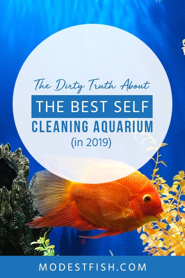 This is a detailed self-cleaning aquarium guide from ModestFish that will show you why self-cleaning fish tanks are not suitable to house fish, and covers topics such as aquarium cleaning tips, aquarium filter and aquarium products. #fishtank #cleaning #cleaningtips