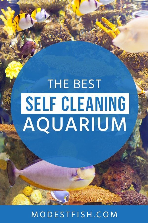 Is self-cleaning aquarium really good for your fish tank? In this article from ModestFish that will show you the reason why self-cleaning fish tanks waste of your time and money and we will share some tips from Experienced aquatists recommend. #fishtankcleaningtips #ModestFish