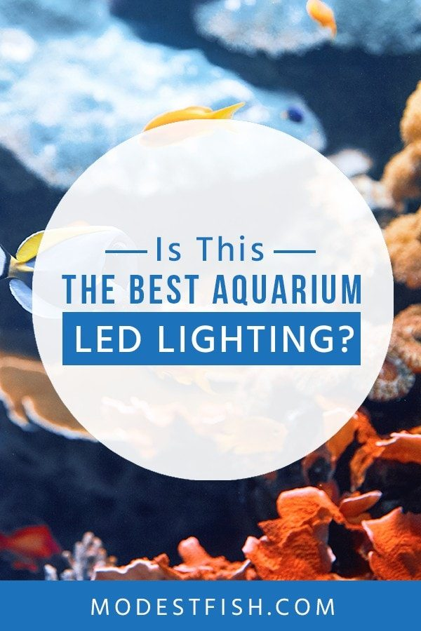 Looking for the best LED lighting for your aquarium? We we will help you to choose the best lighting. Also, we will teach you what you need to consider before buying LED lighting for your fish tank #aquarium #aquariumlightingled #aquariumproducts #ModestFish