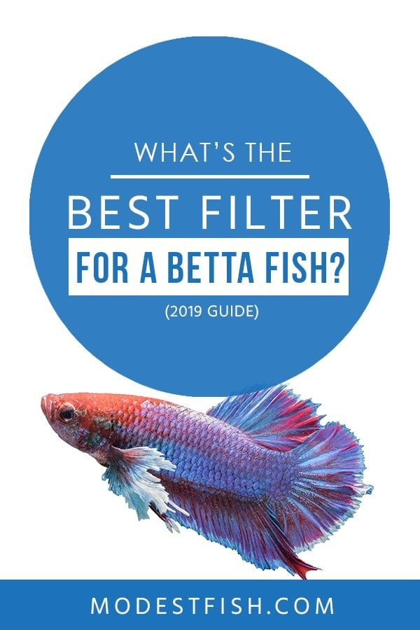 Looking for the best filter for your betta fish? We will share some tips how to choose one. Covers topics such as do betta fish need a filter, popular types of filters for betta reviews and product comparison table. #betta #bettacare #bettafishtankfilter #ModestFish