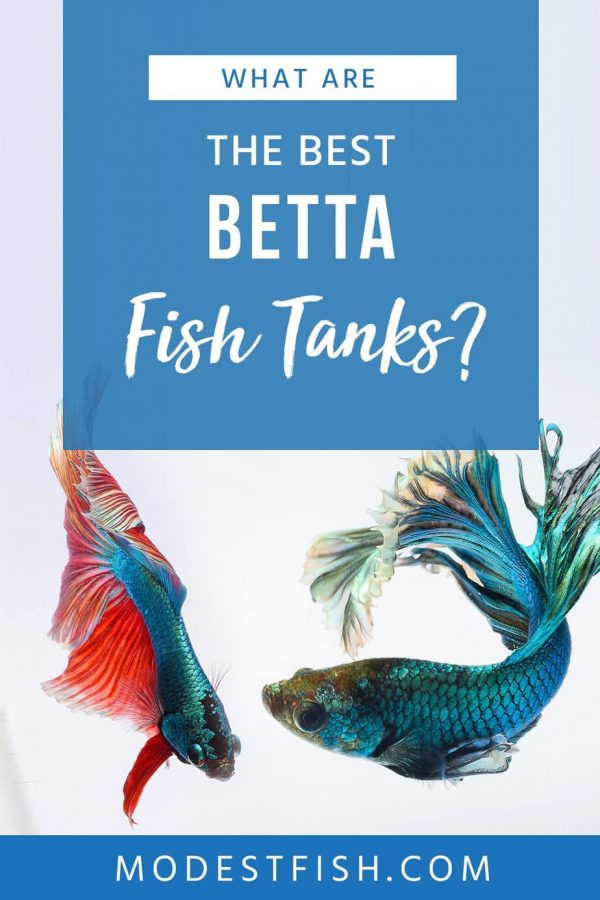 These 5 best fish tanks are perfect for housing your Betta. They'll provide an environment in which your Betta can flourish: living a happy & healthy life! #modestfish #betta #fishtank #aquarium