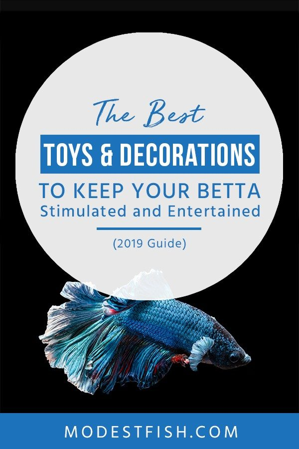 This is a detailed best toys and decorations for betta from ModestFish that you will discover the benefits of having toys and decorations for your betta having fun. Also, you will learn what to look out for when choosing products for betta. #betta #bettatankdecoration #bettacare #ModestFish