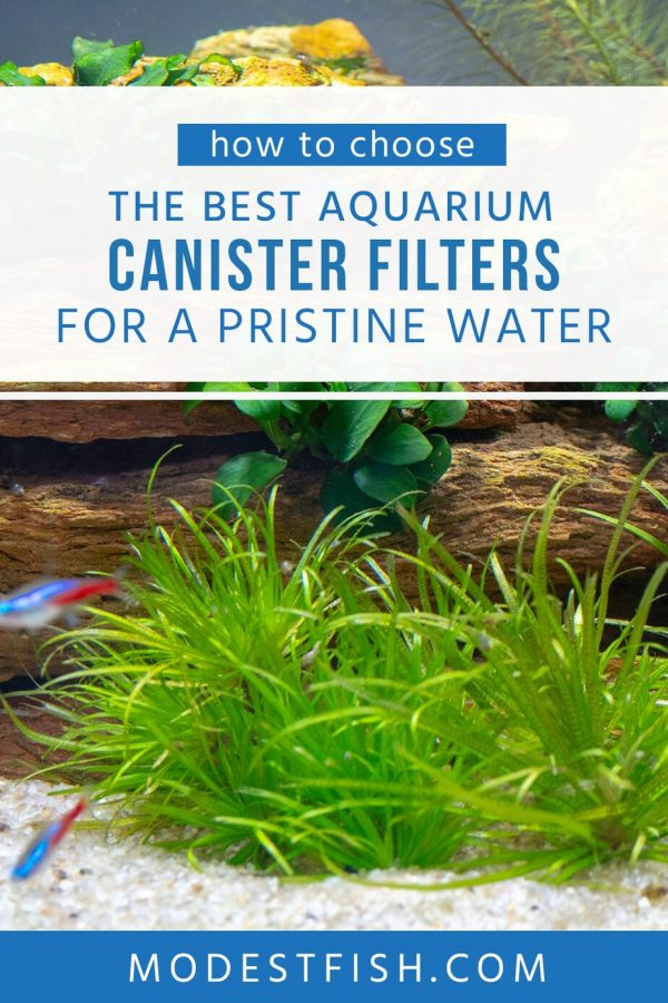 Having a good water filter is like a breath of fresh air for your fish. So you will need the best canister filter to keeping a stable and healthy environment in your aquarium. #aquariumfilter #modestfish