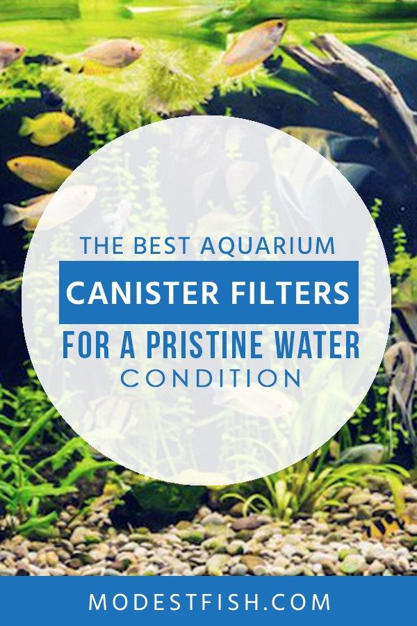 The Best Aquarium Canister Filters for a Pristine Water Conditions in 2019 Reviewed Looking for the best filter for your aquarium? Having a good water filter is like a breath of fresh air for your fish. So you'll want the best canister filter for the job. Here's everything you need to know when choosing one for your fish tank. #aquariumfilters #ModestFish
