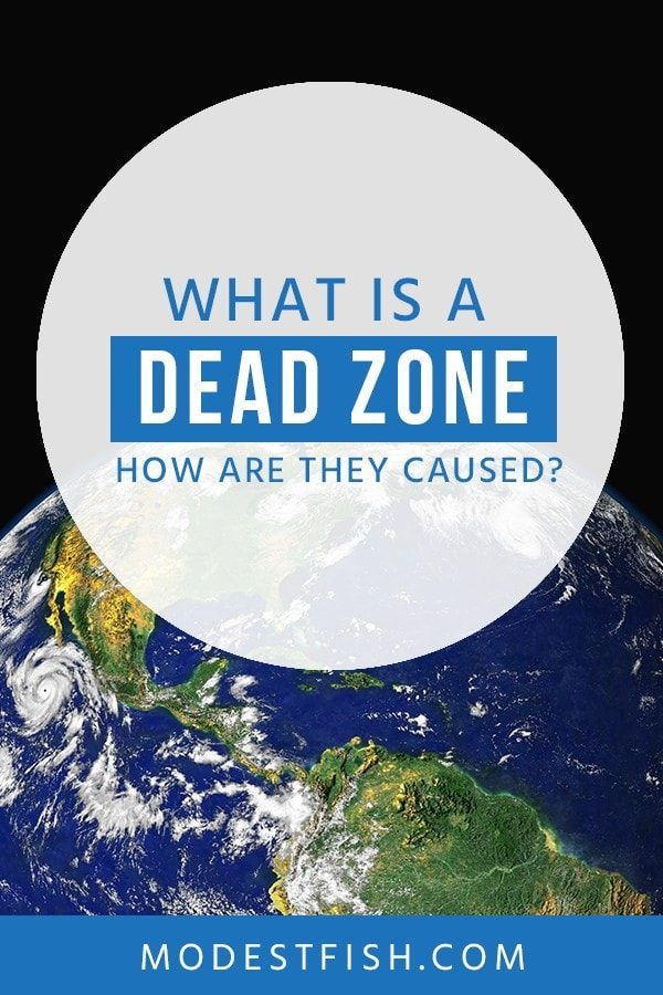 In this article, we will explain what a dead zone is, how they're caused, and the impact they can have on the environment. #environmentcare #modestfish