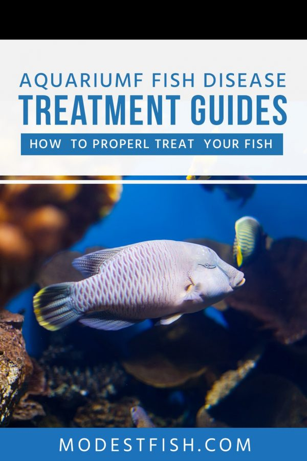 In this article, you'll learn different types of common fish diseases, their symptoms, causes, and how to properly treat your fish. #modestfish #fishcare #aquarium
