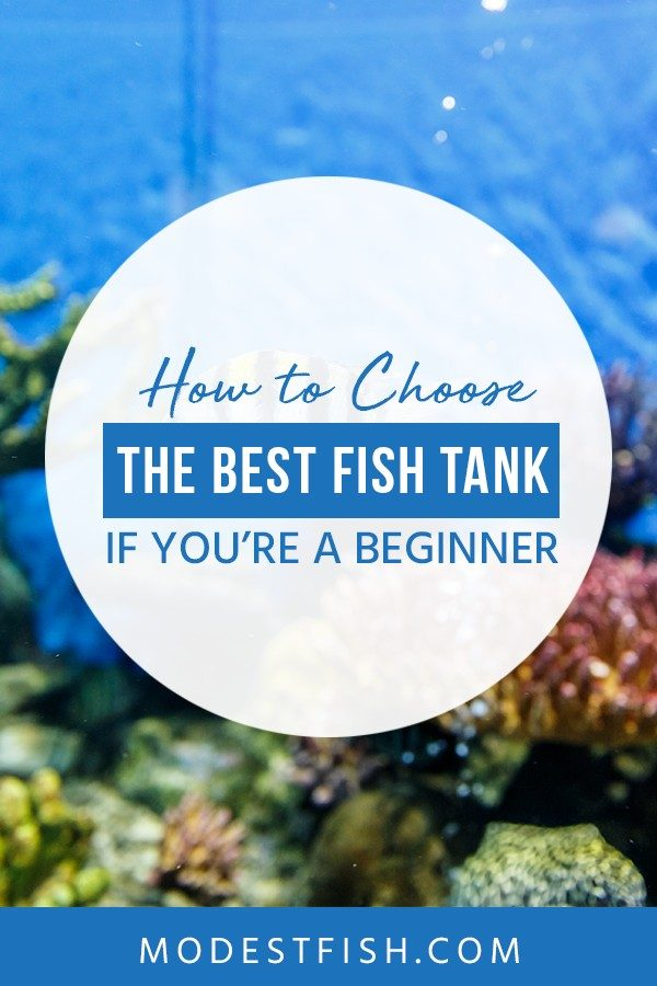 This is a detailed the best fish tank for the beginner from ModestFish that you'll have the knowledge needed to make the right choice when choosing your first aquarium. Covers topics such as what is the best fish tank size for beginners, the best aquarium kits for beginners reviews and more #fishtank #fishtankideas #aquarium #ModestFish