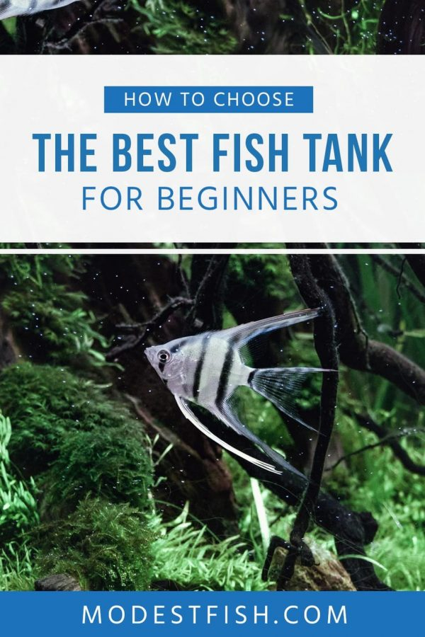 In this article will show you how to choose the best fish tank. Cover topics such as the best fish tank size for your aquarium, what you need to consider when picking your fish tank and reviews for beginner friendly fish tank kits. #modestfish #aquarium #fishtank