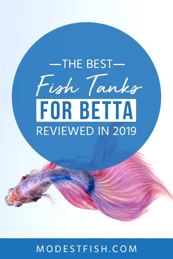Looking for the best Betta fish tank? We will teach how to choose fish tank to keep your Betta happy and healthy. Covers topics such as what to look for when you buy Betta fish tank, Betta fish tank reviews and the best Betta fish tank . #betta #fishtank #fishcare #ModestFish