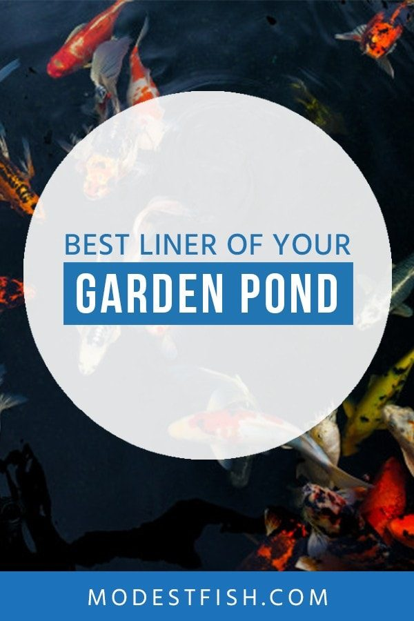 In this guide, I'll walk you through the process of choosing your liner based on your needs, and review the best pond liners availble today. #modestfish #pond #aqaurium #garden