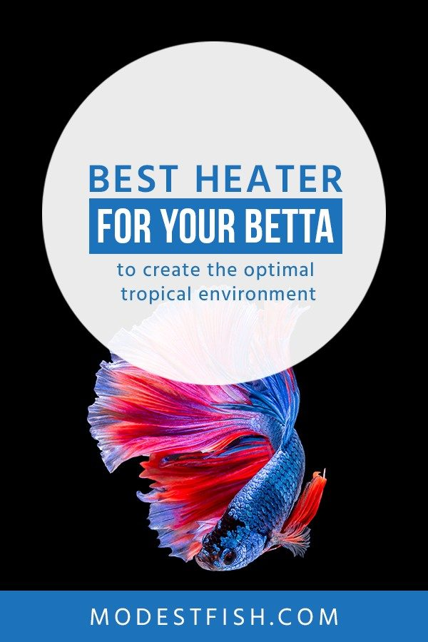 A heater is a vital piece equipment to keep your betta healthy. In this guide, you'll get my reviews for the 5 best safe and reliable heaters for your betta #modestfish #fishtank #betta