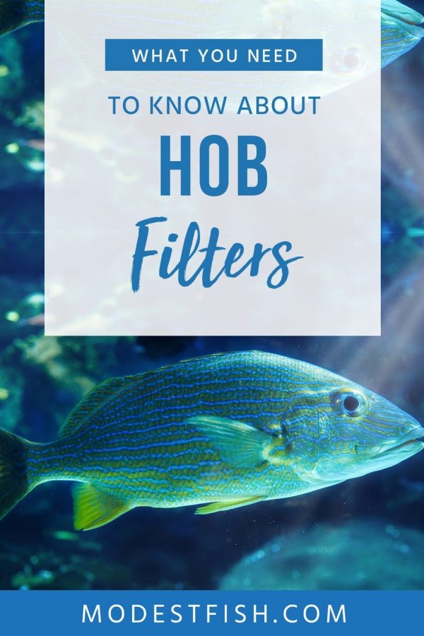 Want the best hang on the back (HOB) filter? We've researched and reviewed some of the best HOB filters currently on the market for you. #modestfish #aquarium #filter