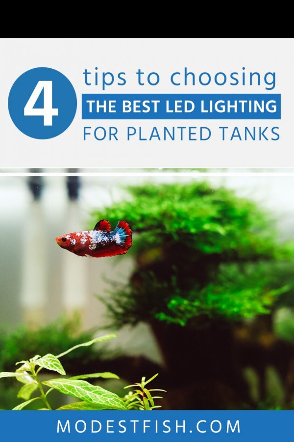 Planted aquarium need a good lightning to thrive and grow. In this article, you'll learn how to choose the right LED lighting for your planted tank. We also recommend some of the best products for planted aquariums currently on the market. #aquariumlighting #modestfish