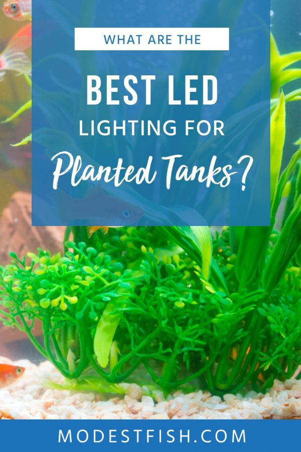 Lighting is essential when it comes to owning a planted aquarium. Without it, you're going to have a hard time. Buy wrong, and you may have too much light–again, giving you headaches. Check out this article for an effect buyer's guide and detailed product reviews so you can get the best lighting available! #modestfish #fishtank #lighting #plant