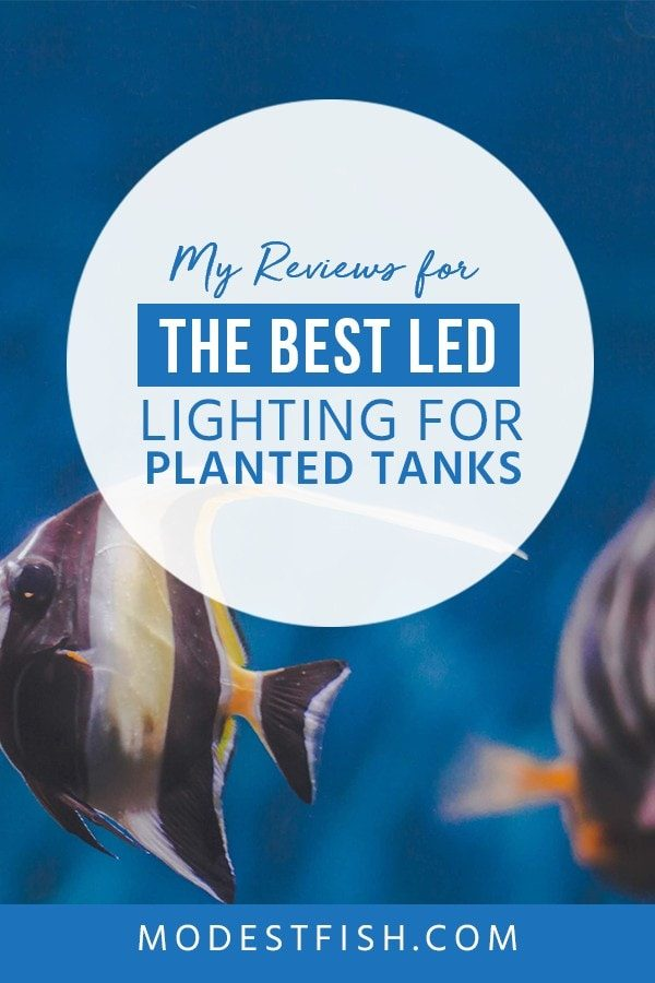 Looking for the best LED lighting for planted tanks? We will share some tips how to choose the LED lighting for planted tanks. Covers topics such as product comparison, LED light review and the best product recommanded. #plantedtanks #fishtankled #fishtanklighting #ModestFish