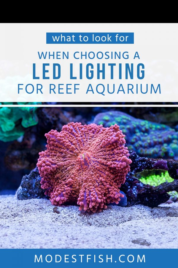Looking for the best LED lighting? In this article, you will learn how to choose the best LED lighting for your reef tank to provide your corals and inhabitants to grow and flourish. #aquariumlighting #modestfish