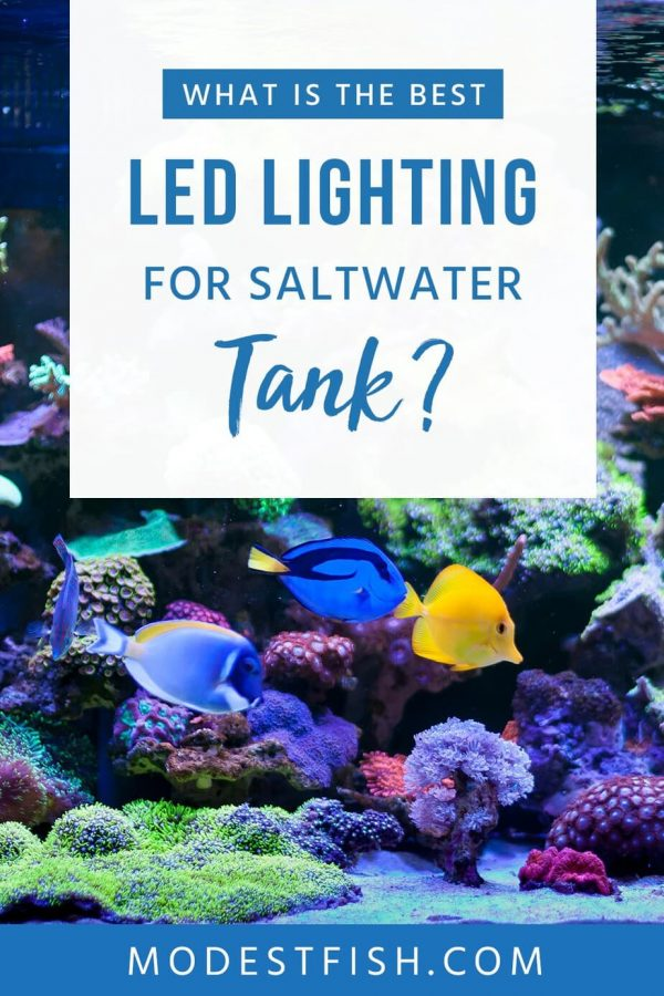 Looking for the best LED lights for your aquarium? We've researched and reviewed the best lights currently available on the market for you. #modestfish #aqaurium #lighting #LED