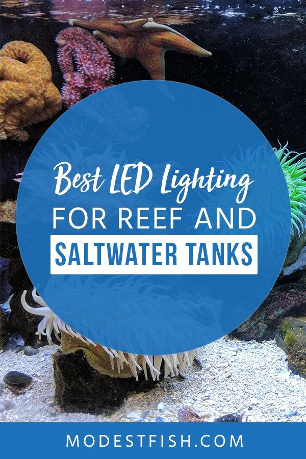 Looking for the best LED lighting for reef aquarium? You will help you choose the best LED lighting for saltwater. Covers topics such as what you need to consider about reef LED lighting, product comparison and the best LED lighting reviews. #reefauarium #saltwater #lighting #ModestFish