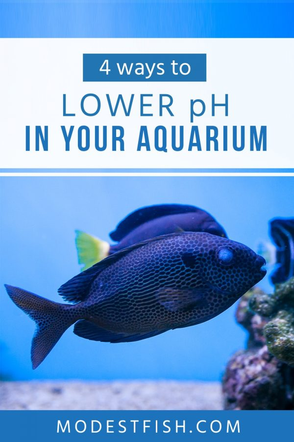 Discover how to safely lower the pH in your aquarium and find out the right method that will help you maintain a consistent pH level in the water. #modestfish #aquarium #water
