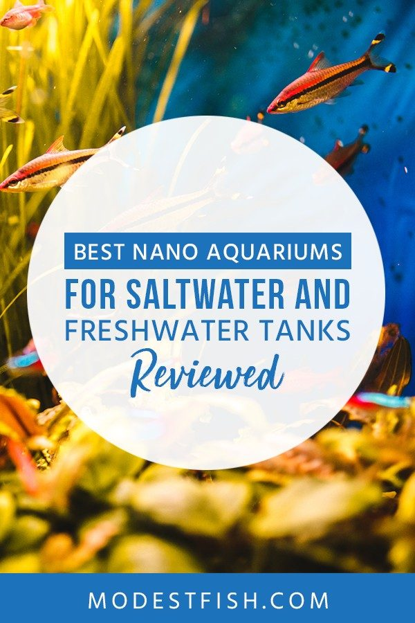 In this article from ModestFish that you will discover what you need to know to ensure you pick the best nano aquarium for saltwater and freshwater. Also, We provide some detailed product reviews so you can find what you need for your fish tank. #nanoaquarium #freshwater #saltwater #ModestFish