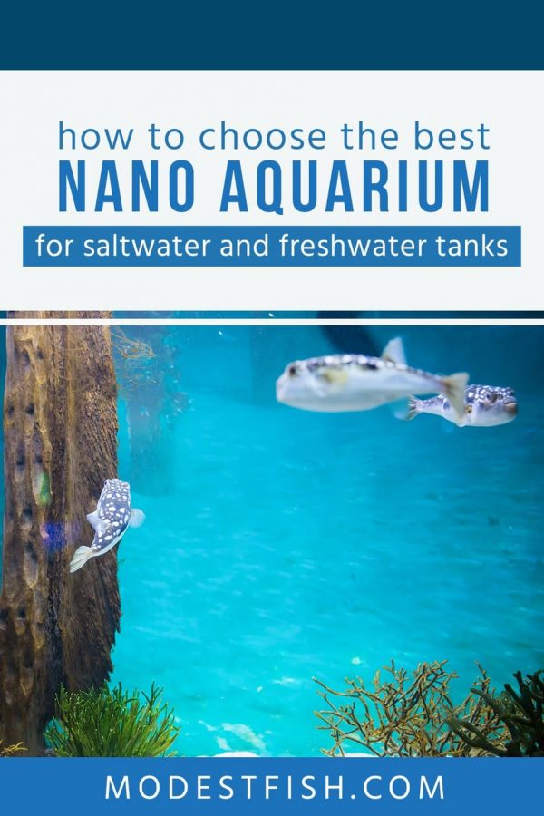 In this article, you'll learn what you need to know to ensure sure you pick the best nano aquarium for saltwater and freshwater. Also, we provide some detailed product reviews so you can find what you need. #modestfish #aquarium #aquascaping