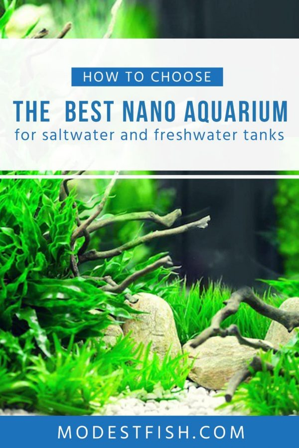 Read on this article, you'll discover what makes a aquarium nano and the reason why you should or shouldn't buy one. Learn how to choose the best nano aquarium for saltwater and freshwater. #modestfish #aquarium #aquascaping