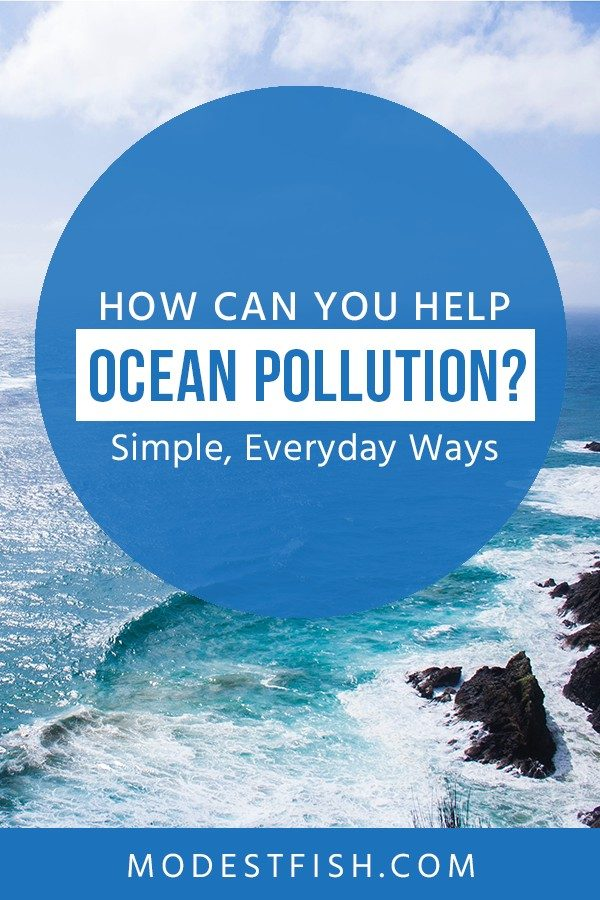 In this article, we will share with you the current state of your ocean and what you can do to help protect the reason you're alive today. #environmentcare #modestfish