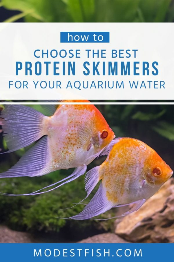 Looking for the best protein skimmer? In this article, what you should know about protein skimmer and you will learn some tips how to choose the best one for keeping your aquarium water clean. #aqauriumcleaning #modestfish