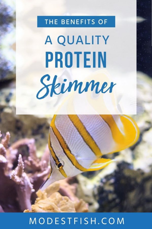 Check out these detailed reviews on the best protein skimmers. We've researched only the best, so you can find the best for your tank! #modestfish #aqaurium #fishtank