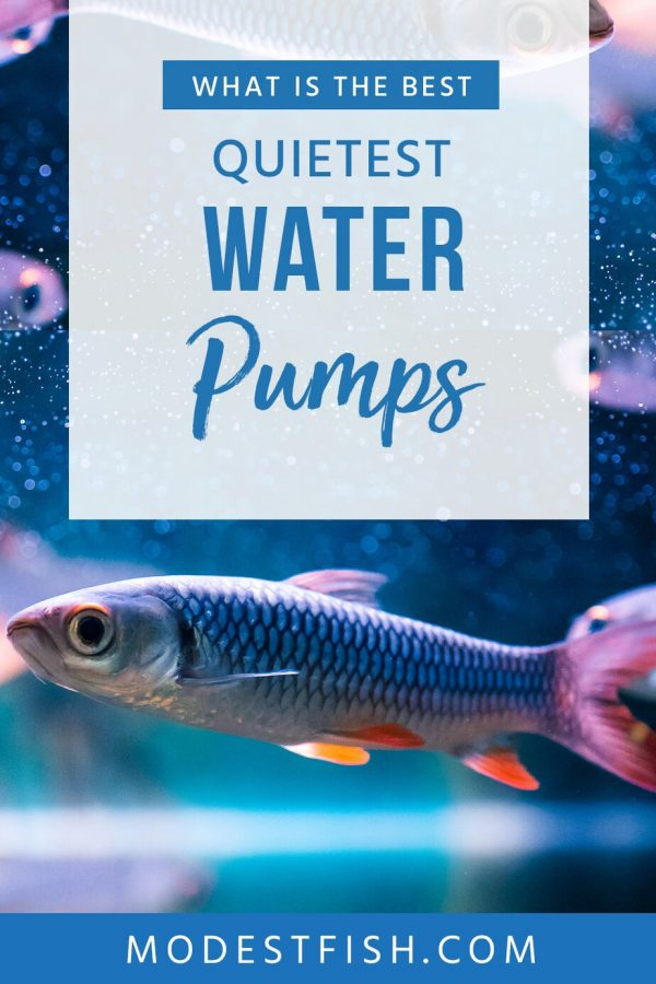 you want the best and quietest water pump for your aquarium, you've found what you're looking for. We've researched and reviewed the best available today. #modestfish #aqaurium #water #pump