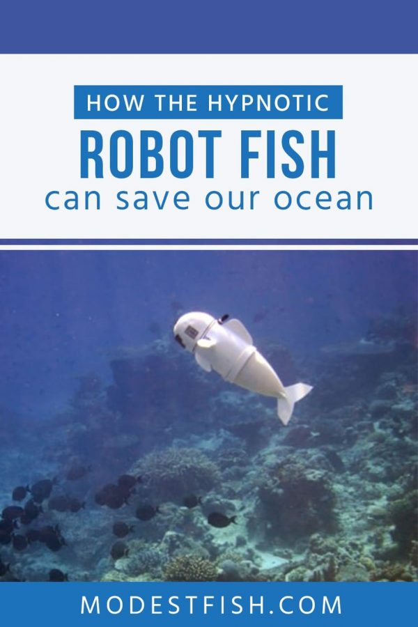 Marine scientist use the Hypnotic robot fish to discover life in the ocean. Find out more in this article why the Hypnotic robot fish can save the ocean. #modestfish #fish #science