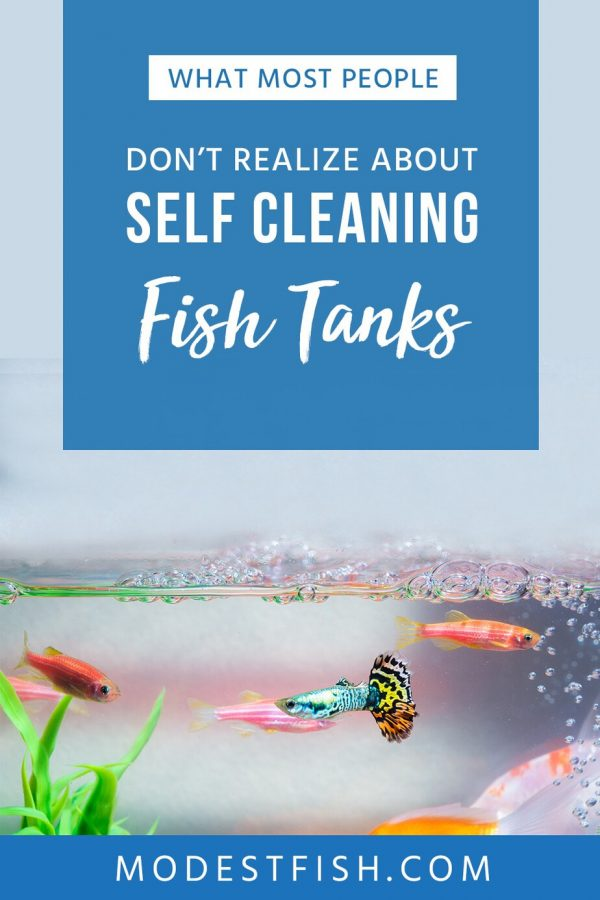 Think buying the best self-cleaning or NoClean fish tank is a good idea? Well, here's the dirty truth the big companies don't want you to know. #modestfish #fishtank #aquarium