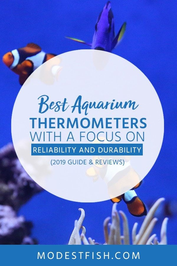 This is a detailed aquarium thermometers guide and reviews from ModestFish that will show you what you need to look for when choosing aquarium thermometers , and covers topics such as product comparison, the benefits of thermometers and the products you should not buy. #fishtank #aquarium #fishcare #ModestFish
