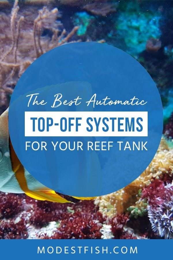 This is a detailed the best automatic top-off systems for reef tank from ModestFish that will teach you how to choose the best ATO system for your setup. Covers topics such as product comparison table for ATO systems, the best ATO reviews and Which ATO is top-off the list #fishtanksaltwater #reeftank #reeftanksetup #ModestFish
