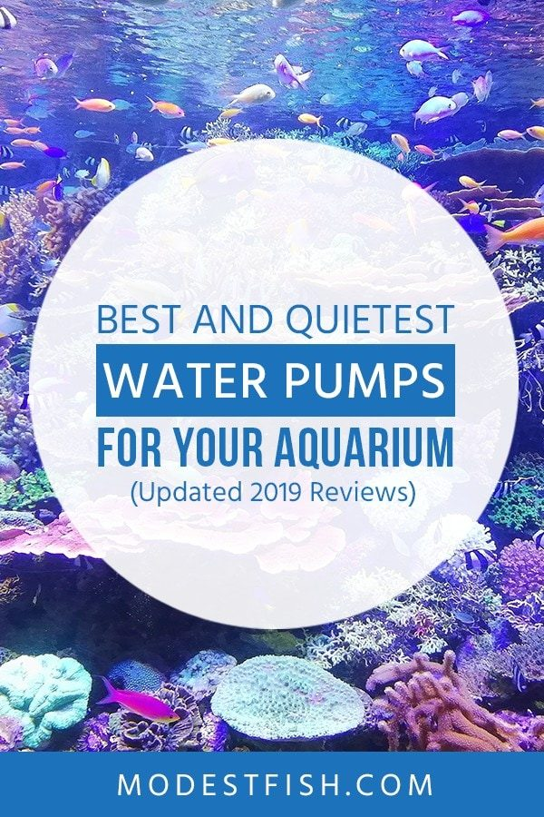 Looking for the best water pump? You will discover the best and quietest aquarium water pumps from ModestFish that will show you what you need to know before buying water pump for your aquarium. Covers topics such as product comparison table, submersible water pumps and in-line water pumps. #aquarium #water #products