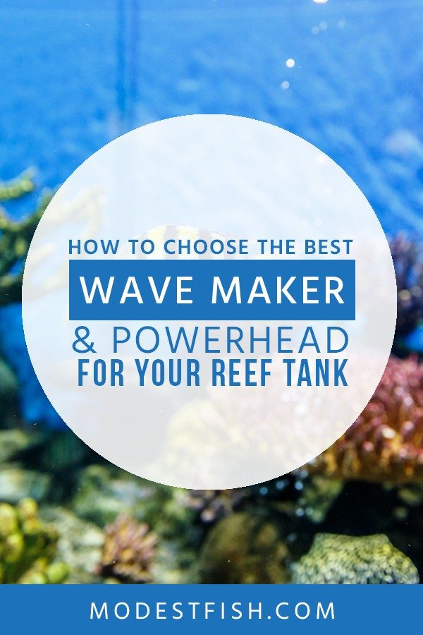 In this article, we teach you how to choose the best wave maker for your set up in your reef tank as well as we will share the best wave maker product reviews with you so you will have healthy reef tank. #aquariumheater #ModestFish