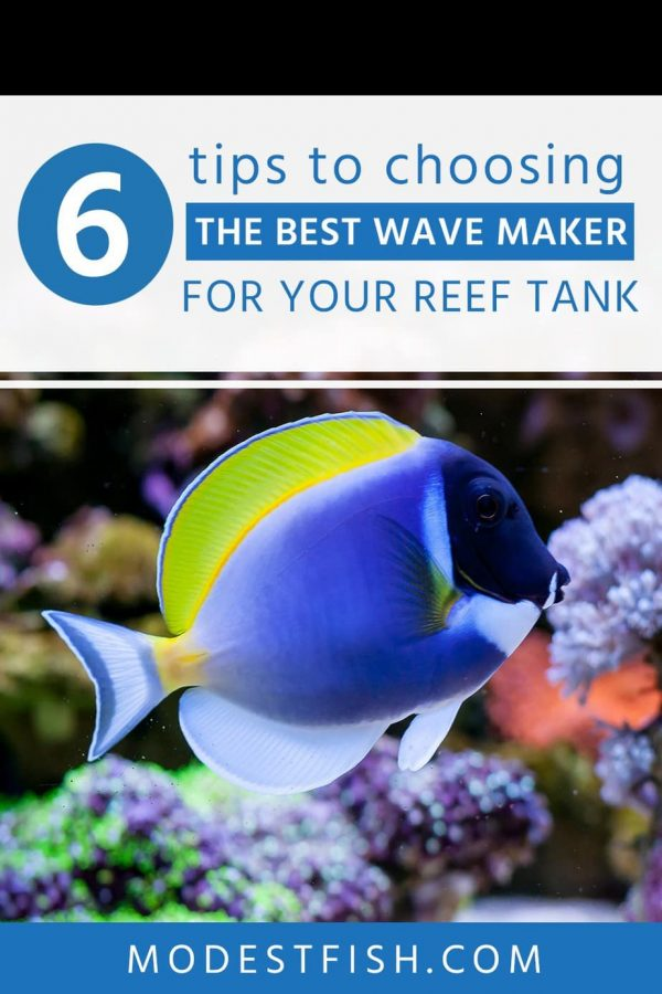 A wave maker is important for a reef tank because it controls the flow in your aquarium. In this article, you will learn how to choose the best wave maker for your reef tank setup. So you can keep healthy life for your fish,coral and other reef invertebrates. #aquarium #modestfish