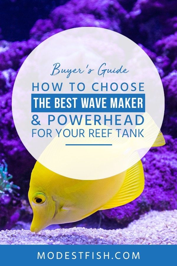 This is a detailed Wave Maker & Powerhead guide from ModestFish that will teach you how to choose the best wave maker for your setup and covers topics such as the benefits of wave makers, the difference between a wave maker and powerhead and product review. #reefaquarium #setup #products #ModestFish